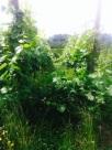 Hier herrscht das Grüne!